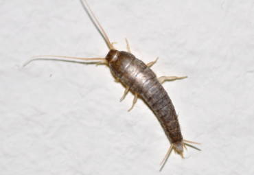 Top 10 U.S. Household Pests