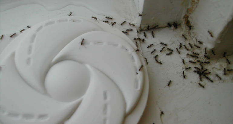 How Do Ants Get Inside The House?