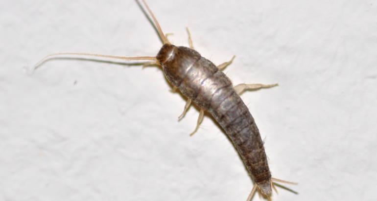 Top 10 U.S. Household Pests
