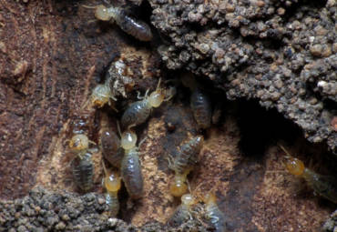 How Termites Can Ruin Your Home